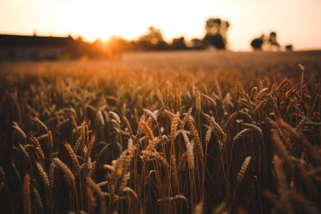 Rusza jesienny sezon ubezpieczenia upraw rolnych!