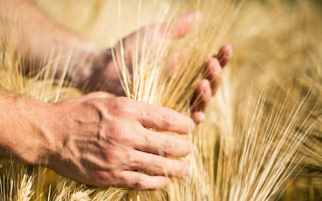 Ubezpieczenie upraw izwierząt gospodarskich w2018 roku – ile dotacji, jakie sumy?