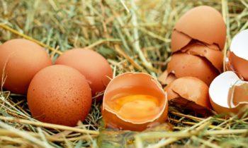 Salmonella drogą dobankructwa producentów drobiu?