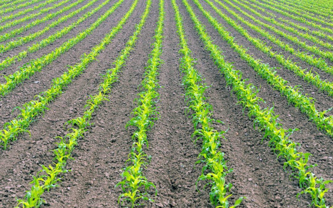 Ruszył wiosenny sezon sprzedaży ubezpieczenia upraw