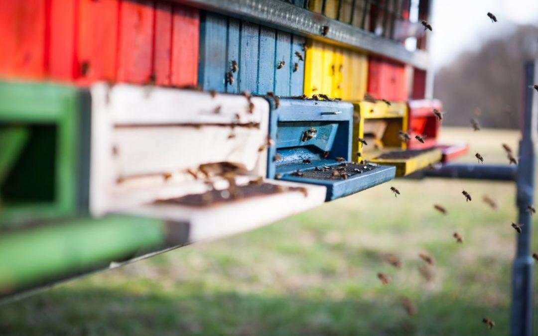Katastrofa ekologiczna pszczelarzy