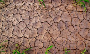 Ponad 66 tysięcy poszkodowanych gospodarstw i1,2 mln hektarów upraw zniszczonych przezsuszę